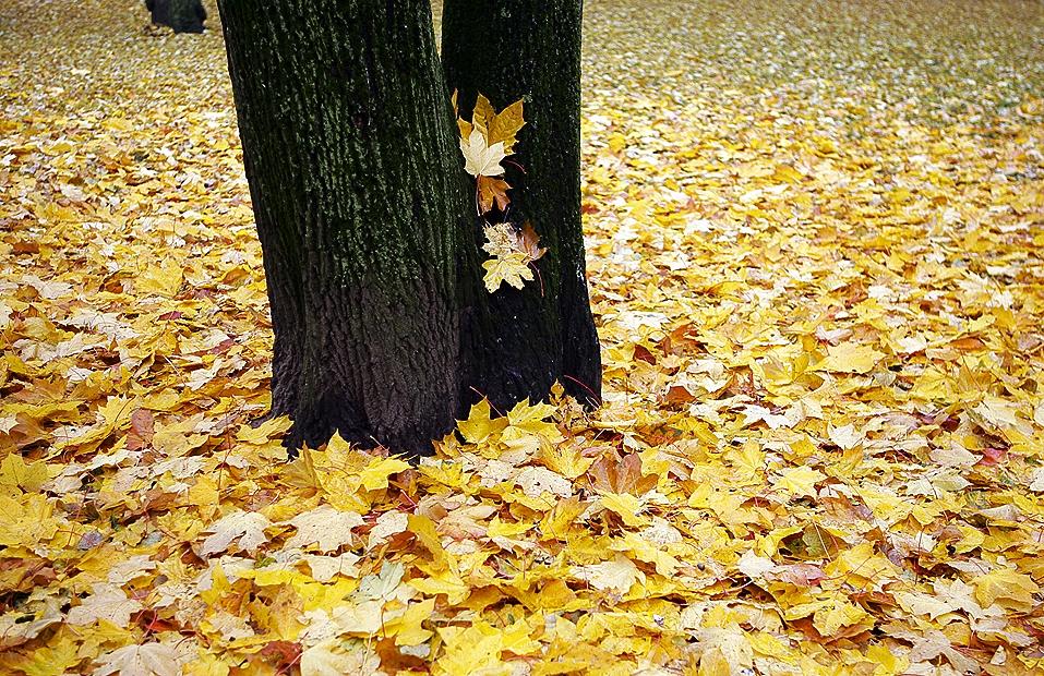 Пусть доплатят за вывоз листвы